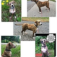 Adopt A Pet :: Amelia - Palestine, TX