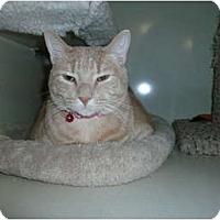 Adopt A Pet :: Jill - Chandler, AZ