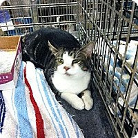 Adopt A Pet :: Julian - Pittstown, NJ