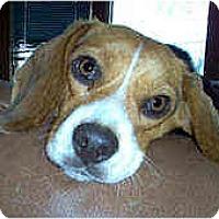 Adopt A Pet :: Peachy - Novi, MI