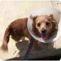 Adopt A Pet :: GWEN - Sacramento, CA