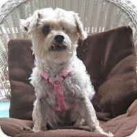 Adopt A Pet :: Gracie - Leesburg, FL
