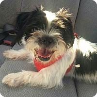 Adopt A Pet :: Little E - Uxbridge, MA
