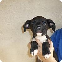 Adopt A Pet :: Mocca - Oviedo, FL