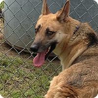 Adopt A Pet :: Janie - Houston, TX