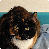 Adopt A Pet :: SLUPE - Phoenix, AZ