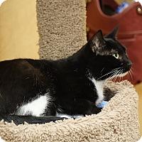 Adopt A Pet :: Olivia - Glen Mills, PA