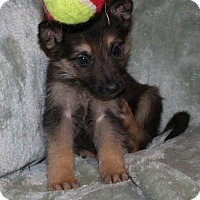 Adopt A Pet :: Molly - Holly Hill, SC