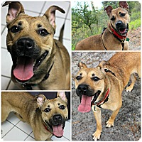 Adopt A Pet :: Athena - Forked River, NJ