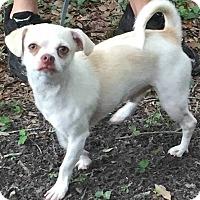 Adopt A Pet :: Ricky - Orlando, FL
