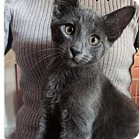 Adopt A Pet :: Dipper - Putnam, CT