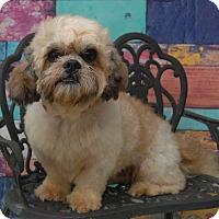 Adopt A Pet :: Queso Ranger - Urbana, OH