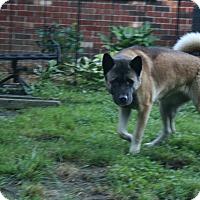 Adopt A Pet :: Charlie - Virginia Beach, VA