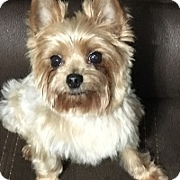Adopt A Pet :: Tobie - Green Bay, WI