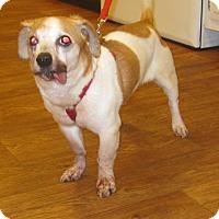 Adopt A Pet :: Earl - Fowlerville, MI