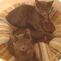 Adopt A Pet :: Rocky and Bullwinkle - Hartland, MI