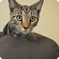 Adopt A Pet :: Kovu - Washington, DC