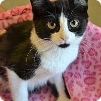 Adopt A Pet :: Oreo - Michigan City, IN
