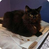 Adopt A Pet :: AUDREY - Hampton, VA