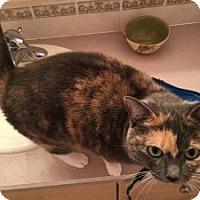 Adopt A Pet :: Sahara - Wasilla, AK