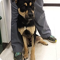 Adopt A Pet :: Boone - Sherman, CT