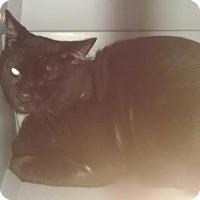 Adopt A Pet :: DR. MEOWZ - Gloucester, VA