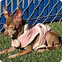 Adopt A Pet :: Penny - Chula Vista, CA