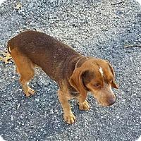 Adopt A Pet :: Dylan (Courtesy Posting) - Malaga, NJ