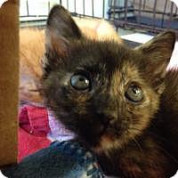 Adopt A Pet :: Tina - Port Richey, FL