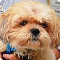 Adopt A Pet :: Almond Harris - Houston, TX