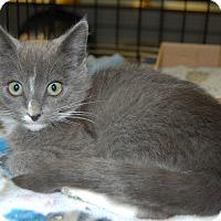 Adopt A Pet :: Everett - Whittier, CA