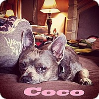 Adopt A Pet :: Coco - Port St. Lucie, FL