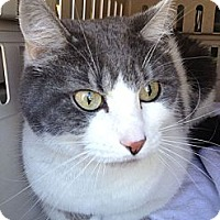 Adopt A Pet :: Lacey - Irvine, CA