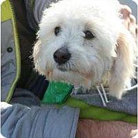 Adopt A Pet :: Dexter - Arlington, TX