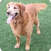 Adopt A Pet :: Ruka - Scottsdale, AZ
