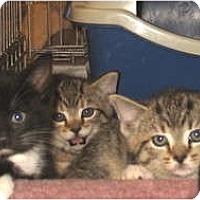 Adopt A Pet :: Chooch - Acme, PA