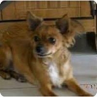 Adopt A Pet :: Virginia - Litchfield Park, AZ