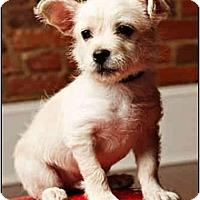 Adopt A Pet :: Curtis - Owensboro, KY