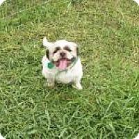 Adopt A Pet :: Chrome - DAYTON, OH