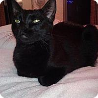 Adopt A Pet :: Midnight - Honolulu, HI