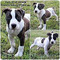 Adopt A Pet :: Earl - Evansville, IN
