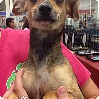 Adopt A Pet :: Peach - Gainesville, FL