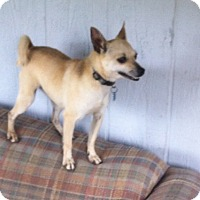 Adopt A Pet :: Roxeanne - springtown, TX