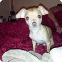 Adopt A Pet :: Baby Boy - Las Vegas, NV