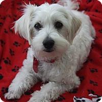 Adopt A Pet :: RIO - san diego, CA