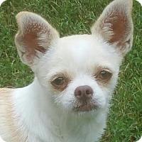 Adopt A Pet :: Pippin - Matthews, NC