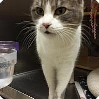 Adopt A Pet :: Rainy - Fort Collins, CO