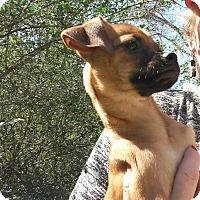 Adopt A Pet :: Felicity - West Warwick, RI