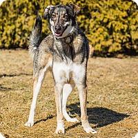 Adopt A Pet :: ZACK - Ile-Perrot, QC