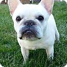 Adopt A Pet :: Jolie-ADOPTION PENDING!!!